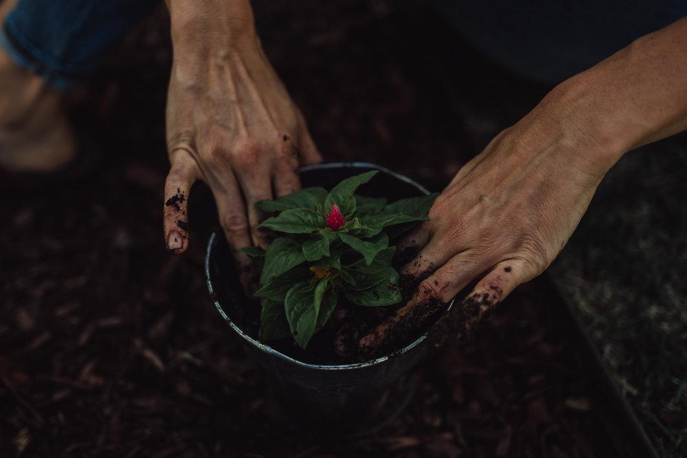 colorado springs family lifestyle gardening photography-73.jpg