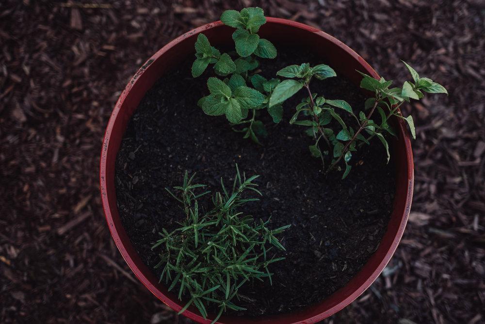 colorado springs family lifestyle gardening photography-72.jpg