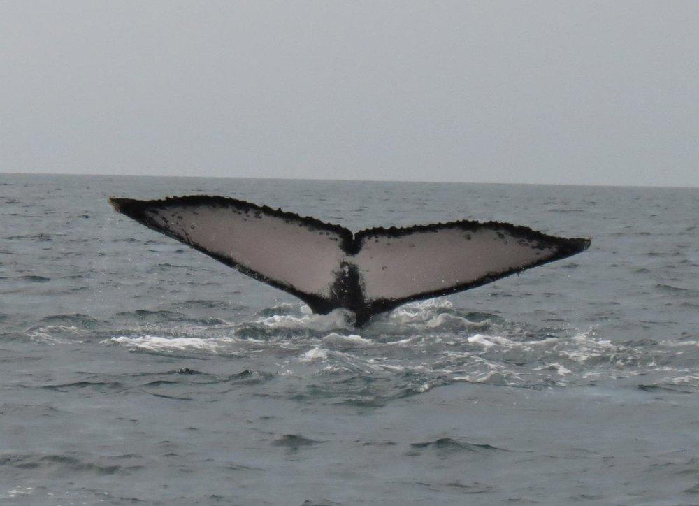 Ver de ballenas