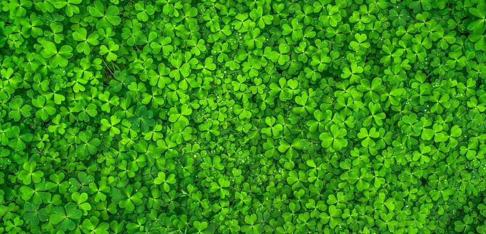 leaf-1482948_960_720.jpg