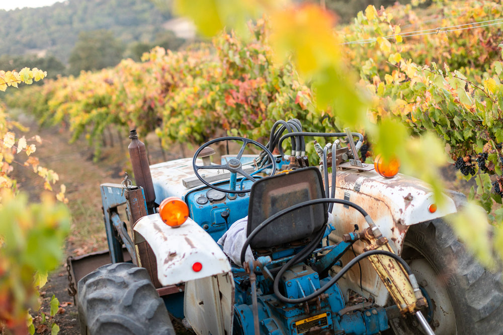 CAB_collective-harvest_2018-0017.jpg