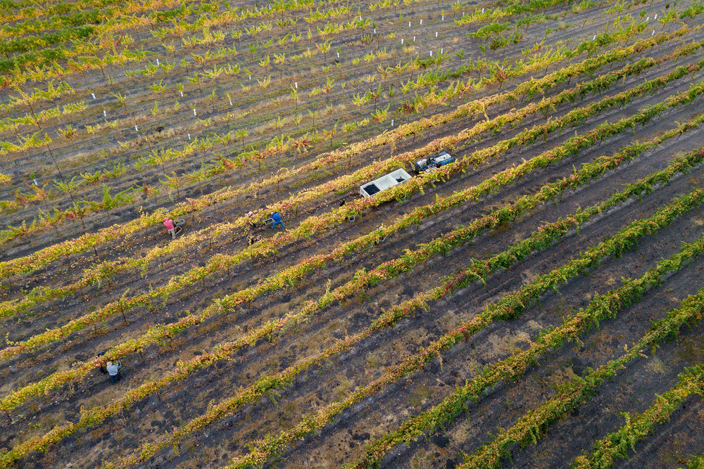 CAB_collective-harvest_2018-0038.jpg