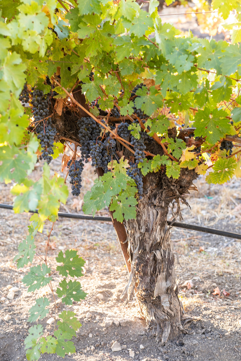 CAB_collective-harvest_2018-0087.jpg
