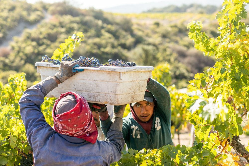 CAB_collective-harvest_2018-0371.jpg