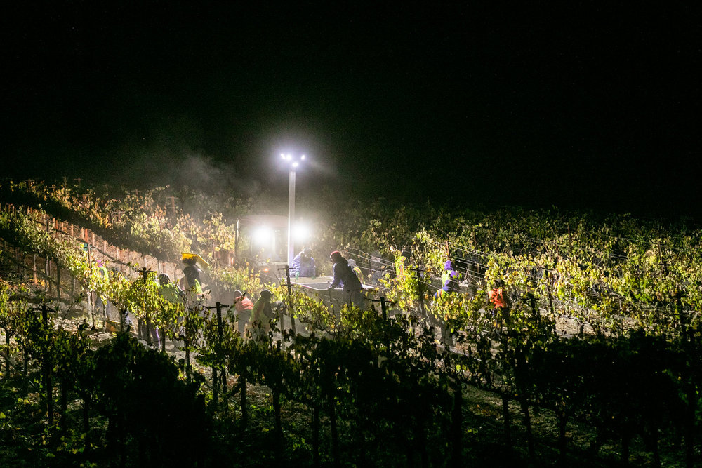 CAB_collective-harvest_2018-0502.jpg