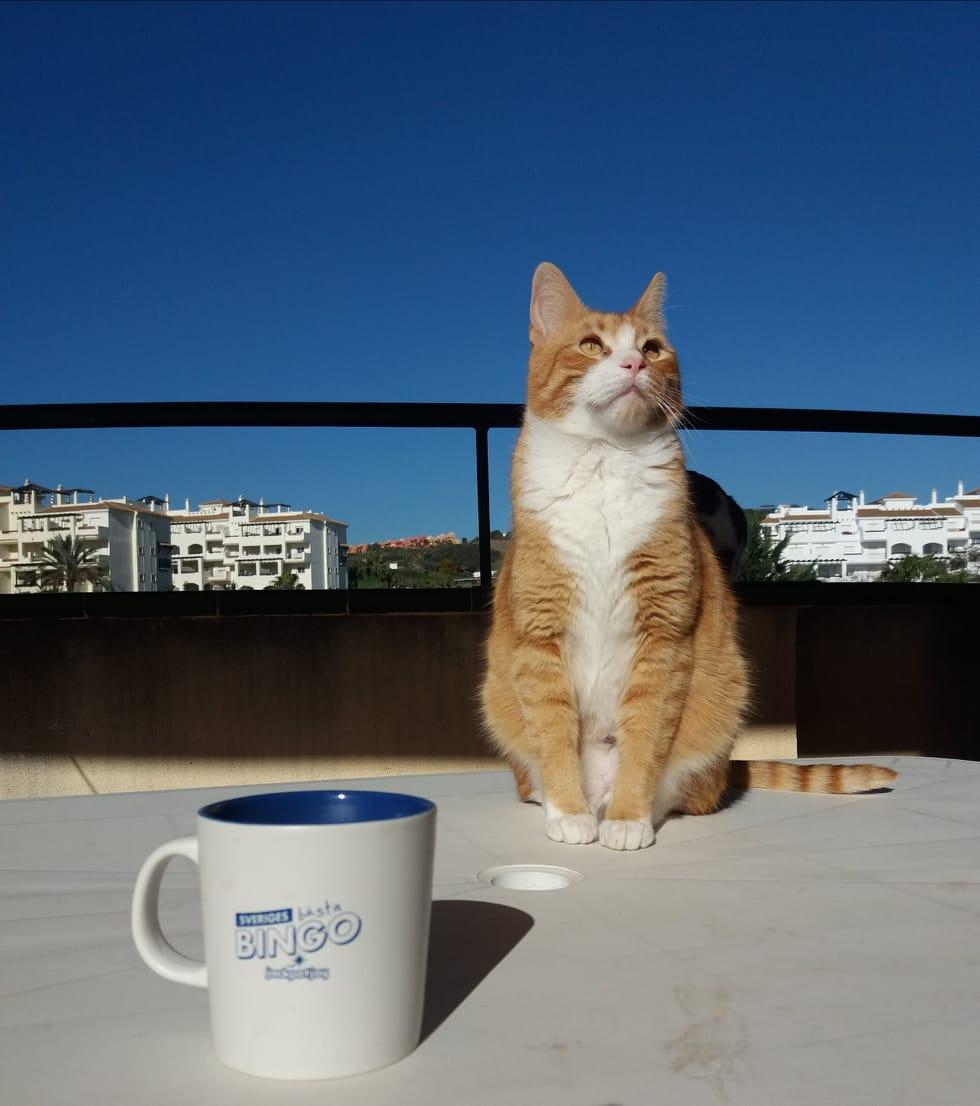 Bilden är tagen innan han doppade tassen i mitt kaffe...