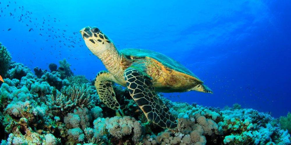 sköldpaddor.jpg