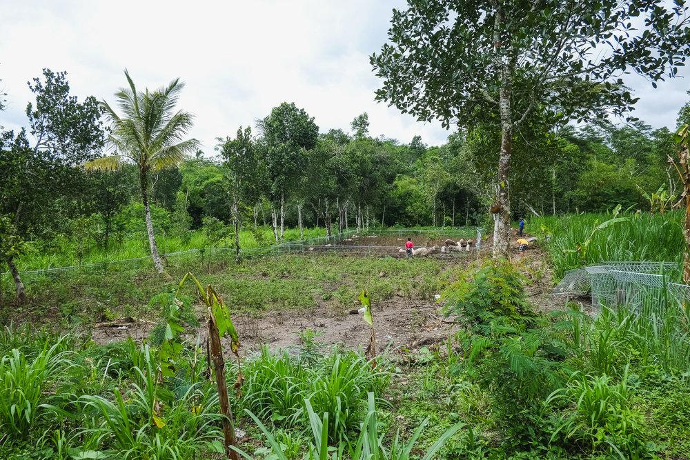 One of our partner's farm in Karangasem