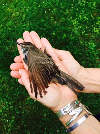 0715_deadbird.jpg