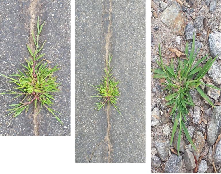 0817-weeds.jpg