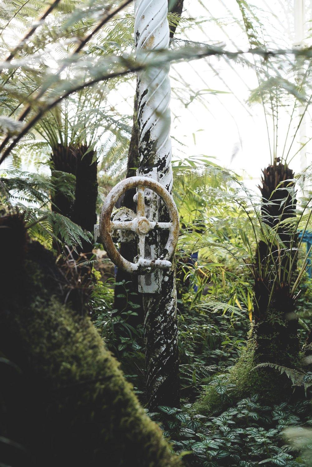 Glasgow Botanics Gardens