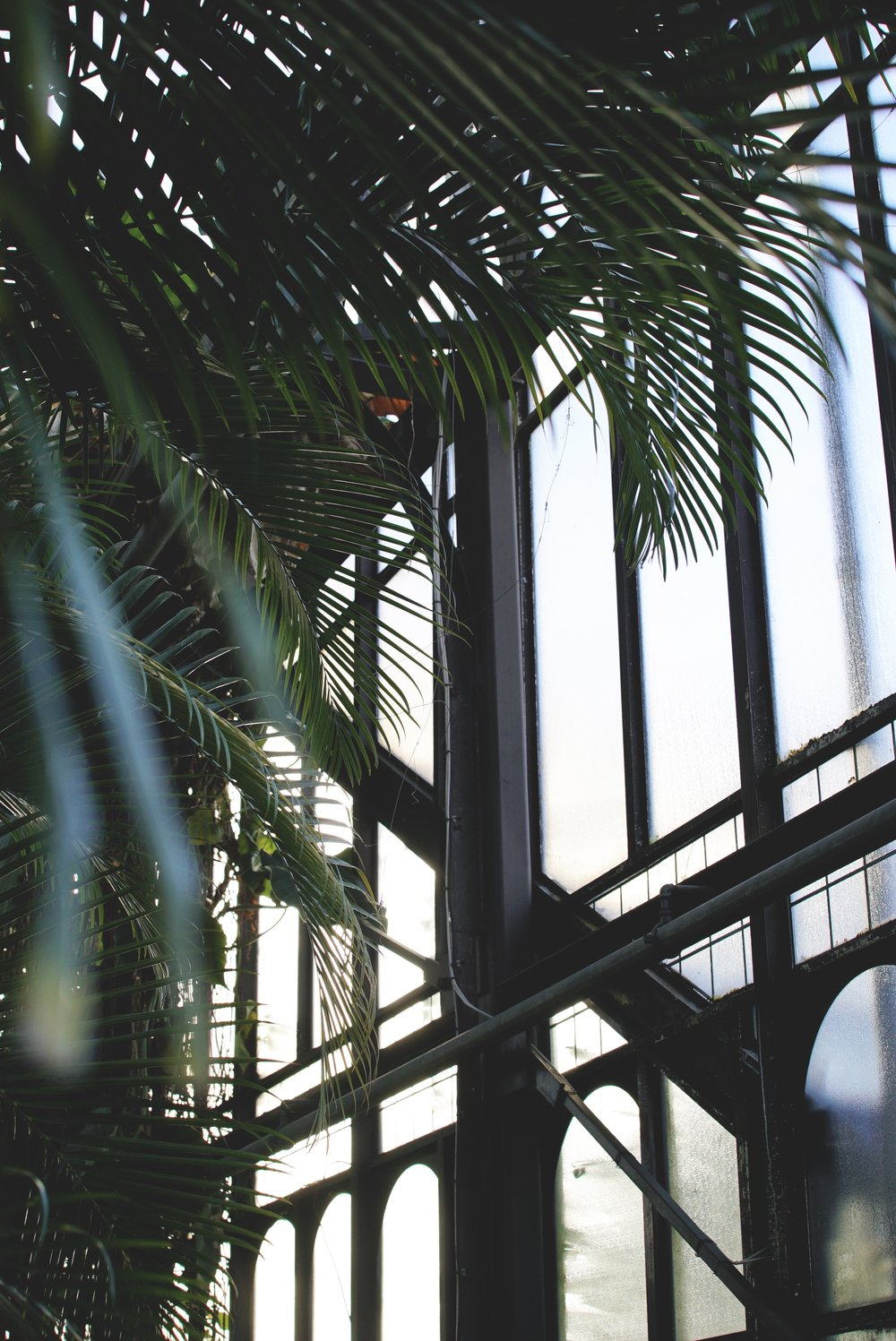 Glasgow Botanics Greenhouse