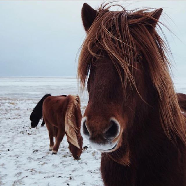 Not all those who wander are lost 🦄 Photo by @dostalkovadomi  #niceland  #thegreatoutdoors  #exploremore