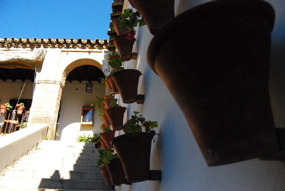 House Plants - Cordoba, Spain.JPG