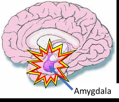 amygdala.png