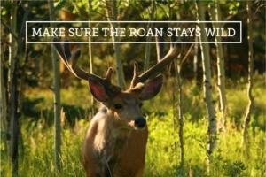 Roan web action card - deer