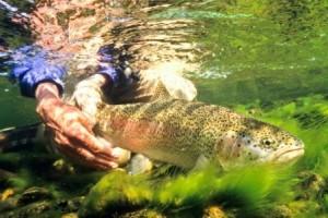 rainbow underwater release