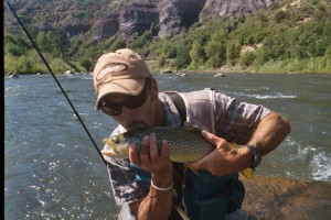 Animas River brown trout post spill