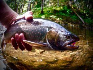 Tenkara Fish