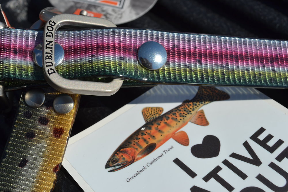 Pictured: Western Native Trout Initiative Sticker and Dublin Dog Co. trout collar.