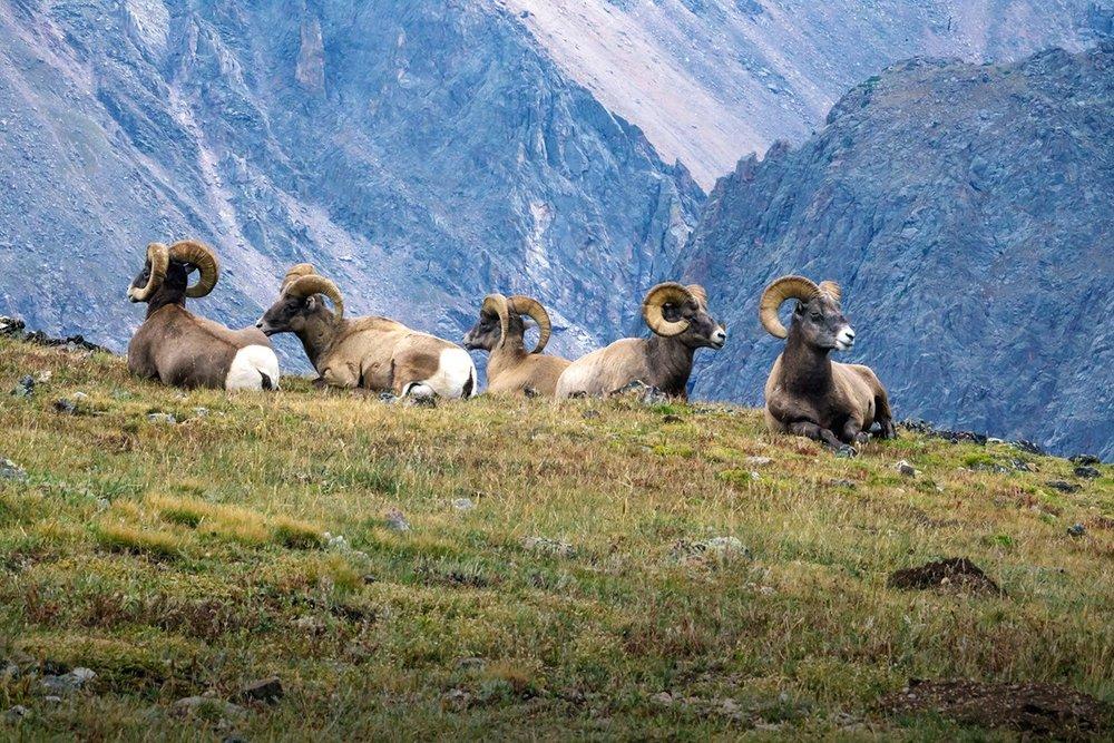 Image courtesy of NPS.