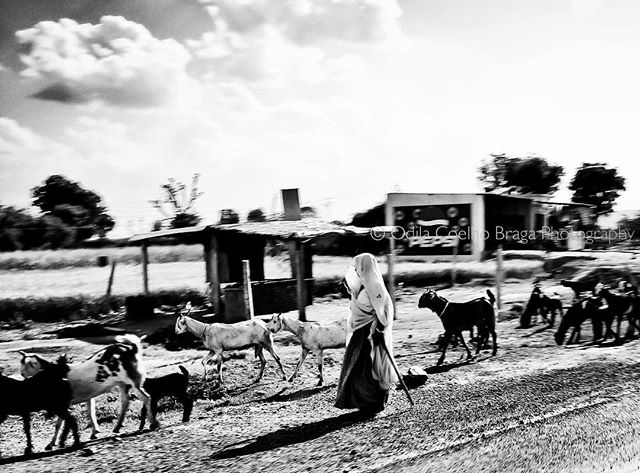 Herding her precious tools! . . . #herding #india #bnw #spi_travel #spi_collective #bnwsouls #bnwphotography #canonphotographer #canon #fotografabrasileiraemlisboa #bnw_life_shots #keepitbrief #bnw_of_our_world #street_perfection #incredibleindia #incredible_bnw #canonglobal #canonpt #spi_light #spi_animals #spi_