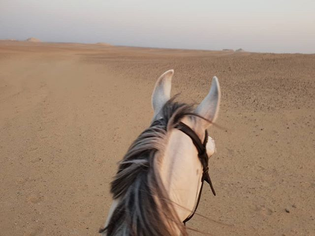 Good morning from the desert 🐎