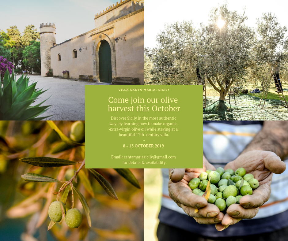 Come join our olive harvest (3).png