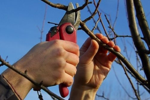 Tree Services (Seasonal Pruning) - Safety and Aesthetics