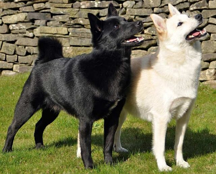 BUHUND DOGS - BlackandWhite_preview.jpg