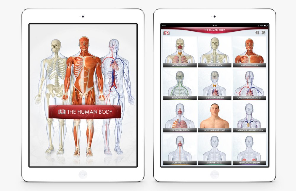 The-Human-Body-1.jpg