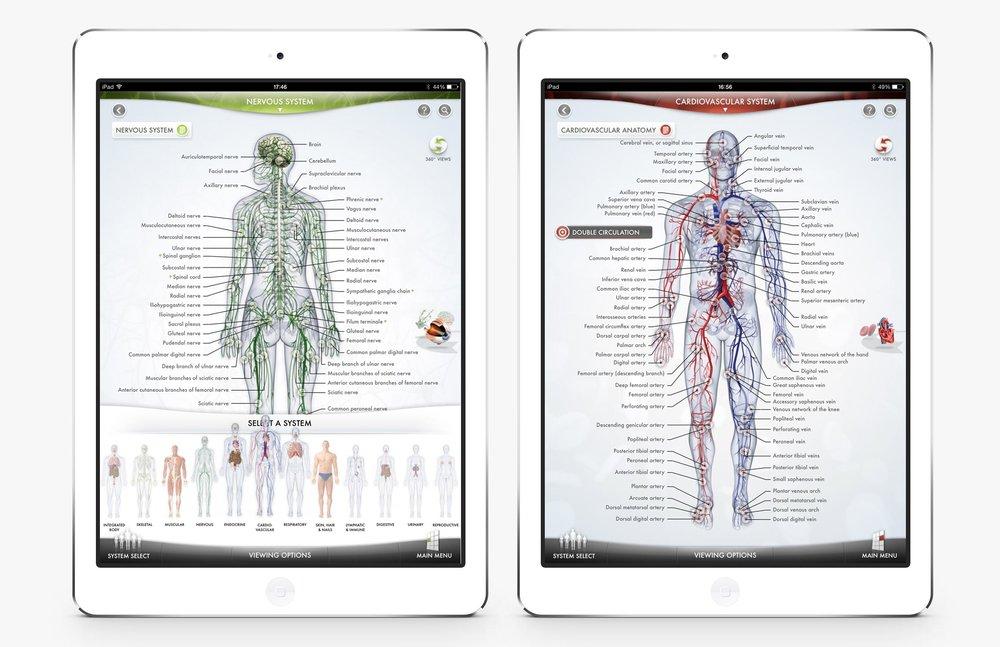The-Human-Body-5.jpg