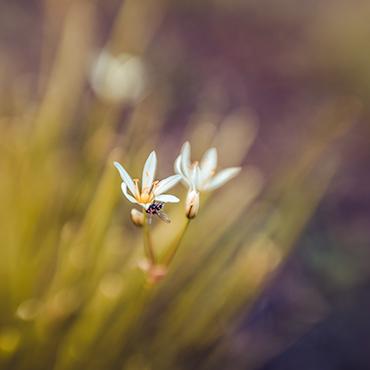 Nature's Little World