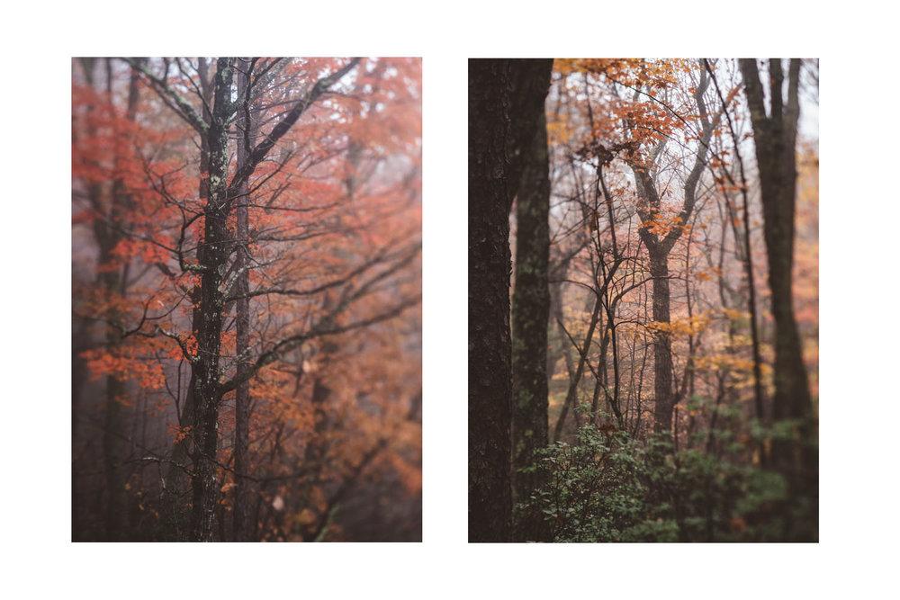 the trees in the fog 1.jpg