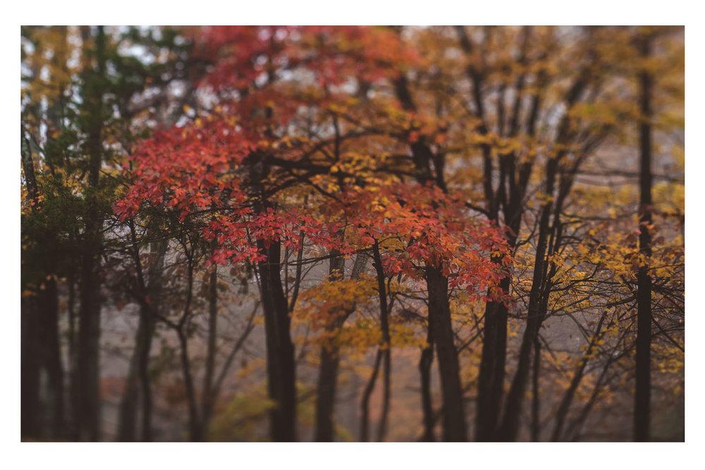 the trees in the fog 3.jpg