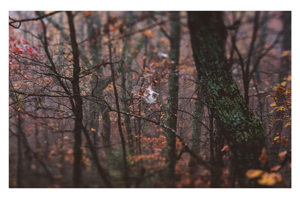 the trees in the fog 6.jpg