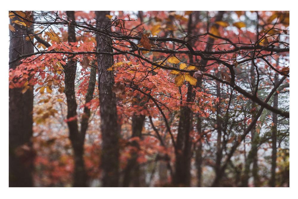 the trees in the fog 7.jpg