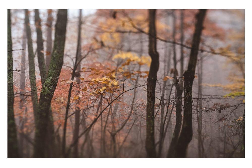 the trees in the fog 8.jpg