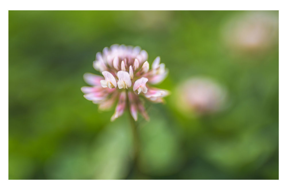 i crawled through the field of pink clovers 5.jpg