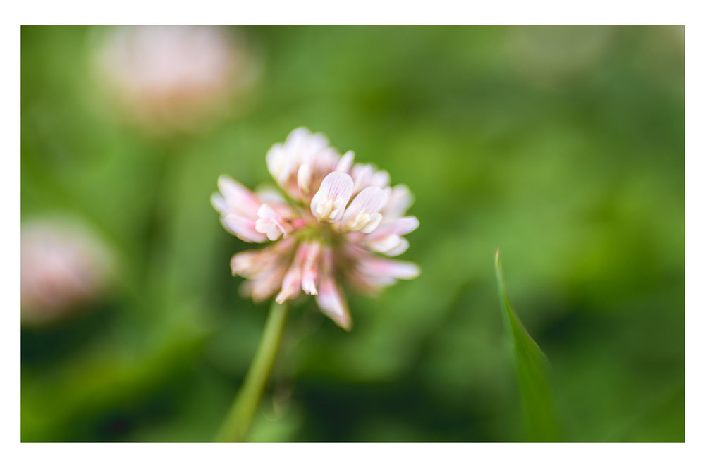 i crawled through the field of pink clovers 4.jpg