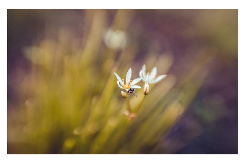 natures little world 1.jpg