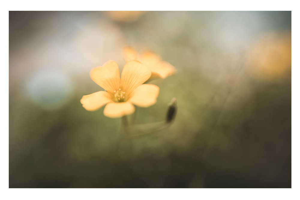 little sprouts of yellow beauty.jpg