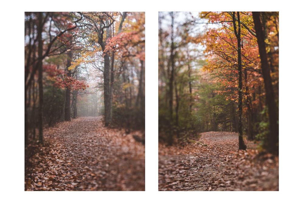 fall2017D.jpg