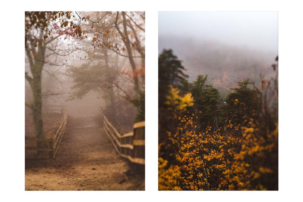 into the fog 1.jpg