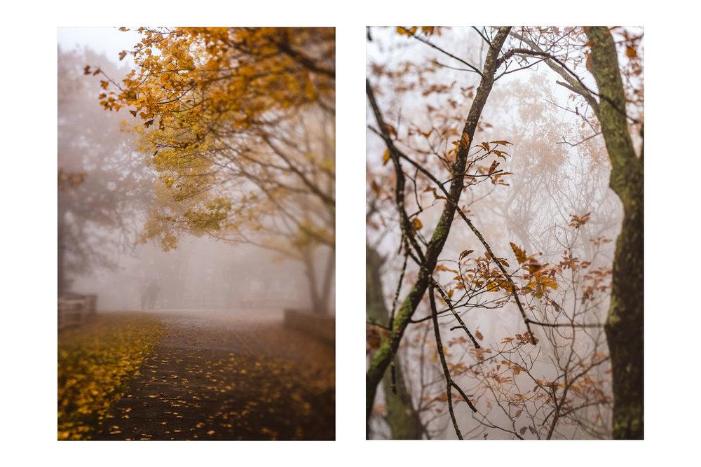into the fog 2.jpg