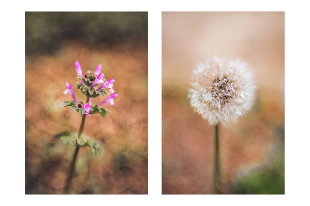 natures little world 3.jpg