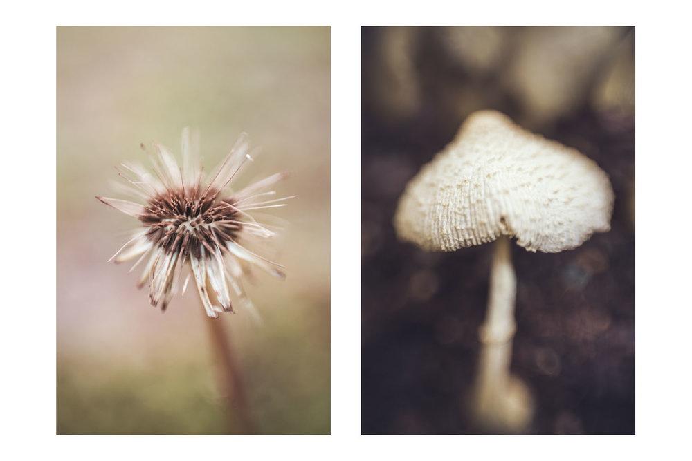 natures little world 4.jpg