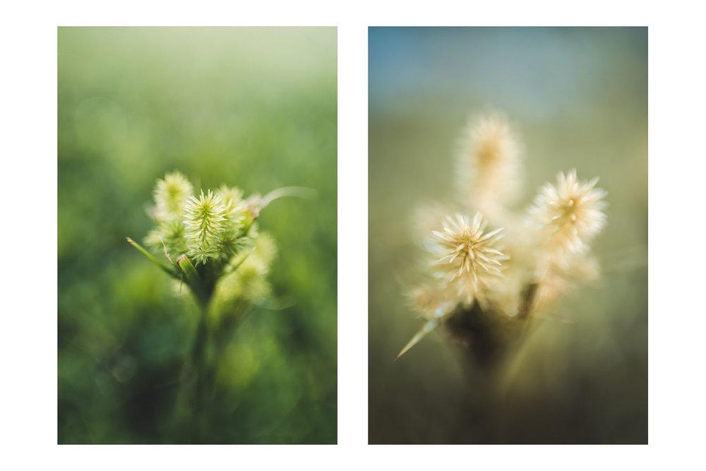 natures little world 6A.jpg