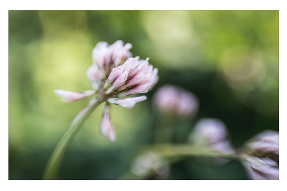 i crawled through the field of pink clovers 8.jpg