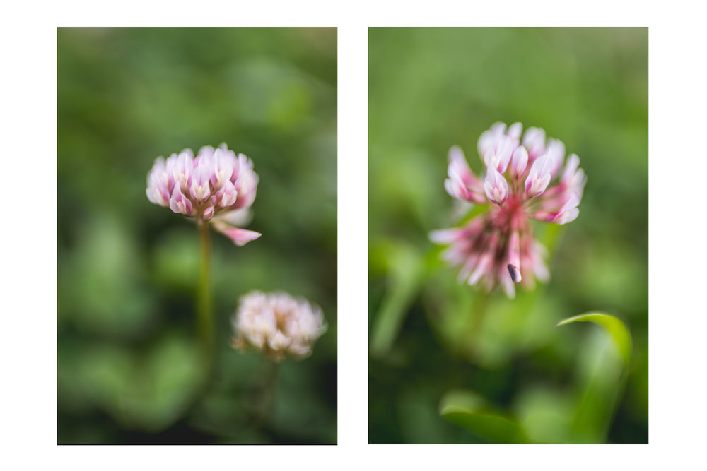 i crawled through the field of pink clovers 7.jpg